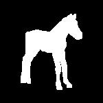 Foals & Ponies