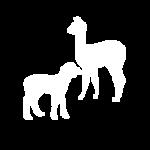 Lambs, Kids & Crias